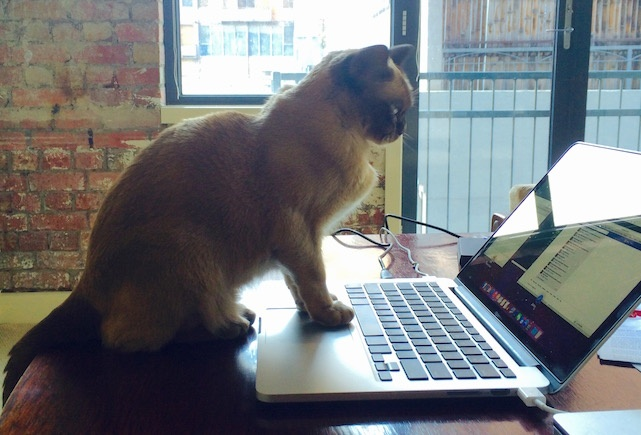 Meo su dung MacBook thanh thao nhu nguoi hinh anh