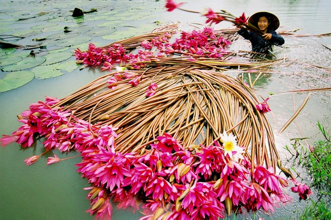 Nhung sac hoa lang man mua thu hinh anh 9