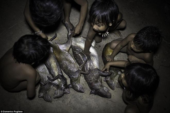 Bo toc ky la o Amazon nhan dong vat hoang da lam con hinh anh 2 Bộ lạc này hầu như không giao tiếp với thế giới bên ngoài, hiện nay, bộ lạc Awa đang có nguy cơ biến mất do yếu tố bên ngoài như phá rừng để xây dựng của thế giới văn minh. (Nguồn: Dailymail)
