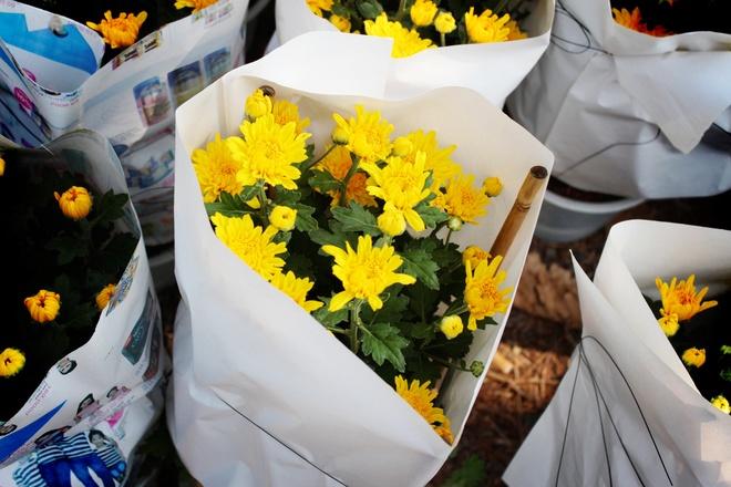 Du khach ve voi vuon hoa Tet o Sa Dec hinh anh 12