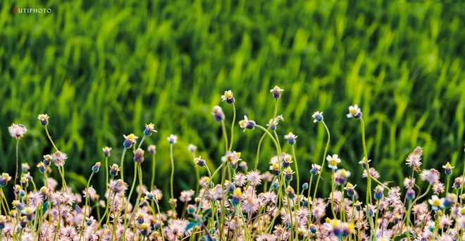 Nhung mau hoa tren duong phuot mua thu hinh anh 12