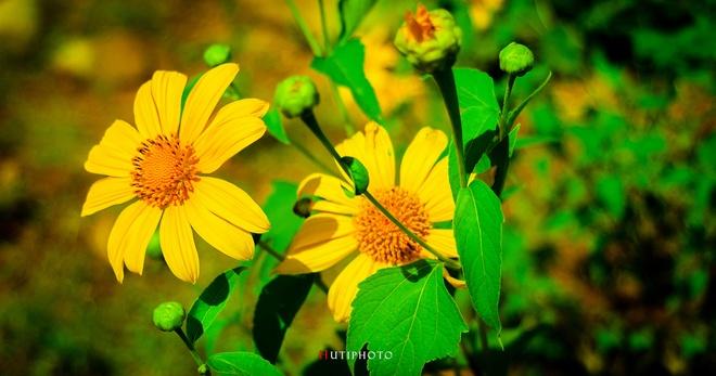 Nhung mau hoa tren duong phuot mua thu hinh anh 9
