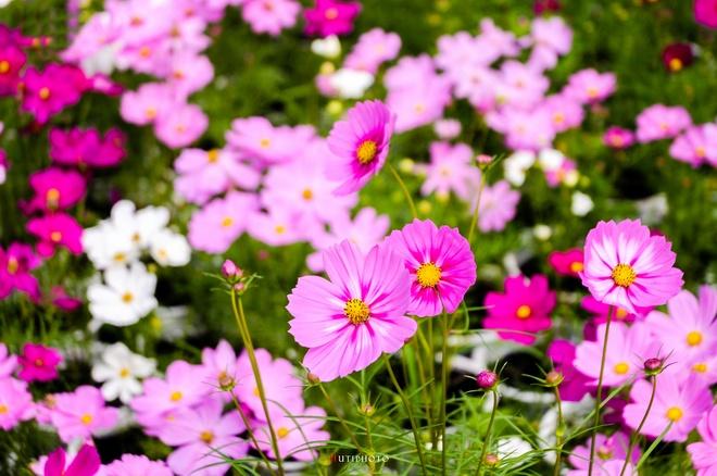 Nhung mau hoa tren duong phuot mua thu hinh anh 17