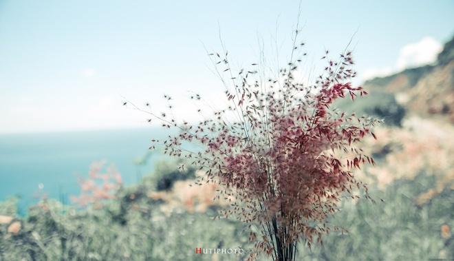 Nhung mau hoa tren duong phuot mua thu hinh anh 7