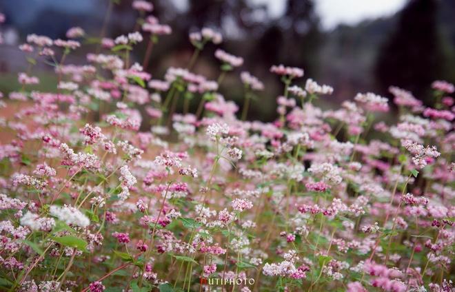 Nhung mau hoa tren duong phuot mua thu hinh anh 1