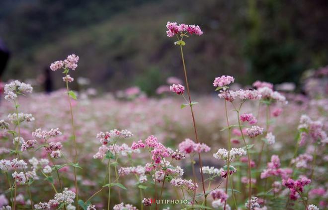 Nhung mau hoa tren duong phuot mua thu hinh anh 2