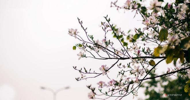 Nhung mau hoa tren duong phuot mua thu hinh anh 5