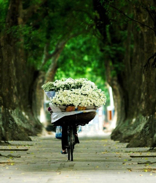 Kham pha 5 mua hoa dep khap ca nuoc trong cuoi thang 11 hinh anh 6