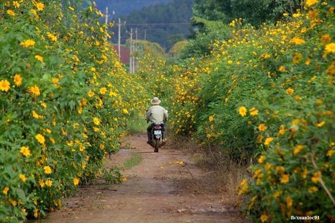 Kham pha 5 mua hoa dep khap ca nuoc trong cuoi thang 11 hinh anh 2
