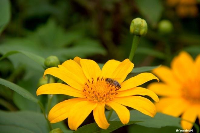 Kham pha 5 mua hoa dep khap ca nuoc trong cuoi thang 11 hinh anh 1