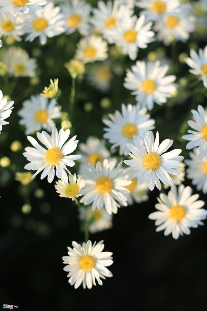 Kham pha 5 mua hoa dep khap ca nuoc trong cuoi thang 11 hinh anh 5