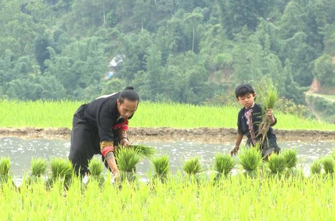 Bo con Hong Dang, Anh Khoa loi bun hoc cay lua hinh anh 6