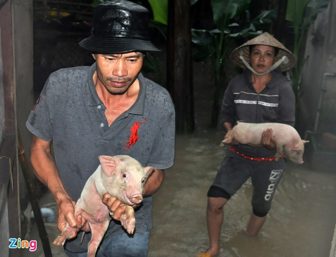 Hang nghin nha dan Quang Ngai ngap sau trong lu hinh anh