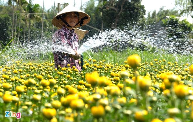 Thuong lai do ve lang hoa cuc lon nhat mien Trung hinh anh 3