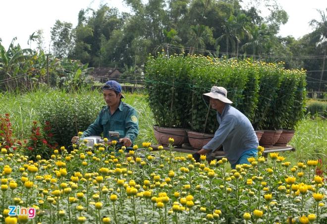 Thuong lai do ve lang hoa cuc lon nhat mien Trung hinh anh 4