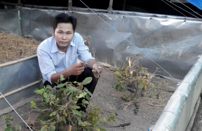 Tu chang trai ngheo bo hoc thanh ong chu kiem 500 trieu/nam hinh anh 2 Trang trại mối giúp Duy thu nhập 500 triệu/năm.