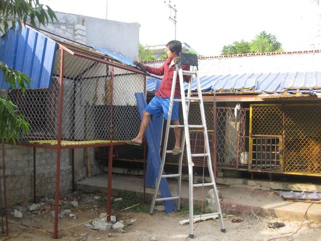8X Viet thanh dai gia nho nuoi loai cho dat nhat hanh tinh hinh anh 4 Thời gian đầu, Kiều Văn Hoàng tự làm chuồng đơn sơ để nuôi giống chó này. Đây cũng là giai đoạn khó khăn nhất: