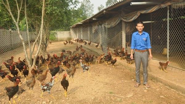 Trần Văn Hải bên đàn gà.