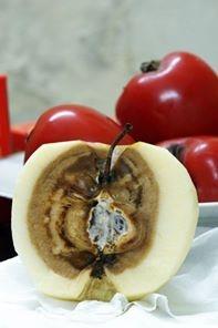 Yeu cau lam ro ve 'le 5 thang, tao 9 thang khong hong' hinh anh 1 Một độc giả chia sẻ hình ảnh quả táo Trung Quốc trên Facebook-  táo mua về ăn bên ngoài vẫn tươi nguyên nhưng bên trong thấy rõ bị ngấm thuốc bảo quản - ảnh Duong Thi Vu