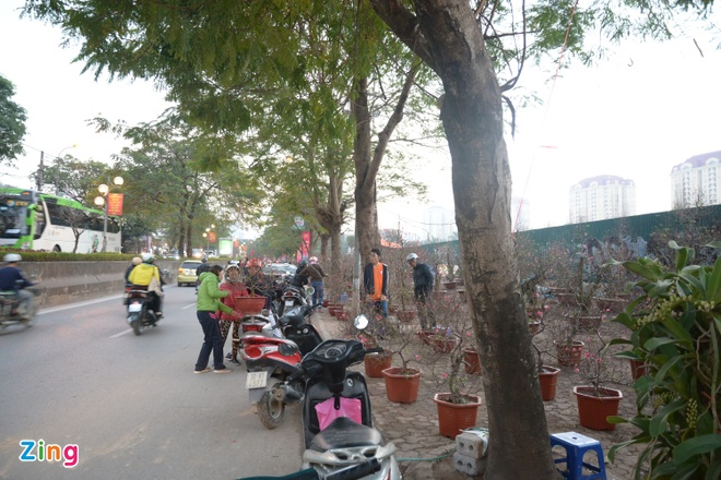 Cho Tet Ha Noi: Dao rung hut khach, mai vang diu hiu hinh anh 1