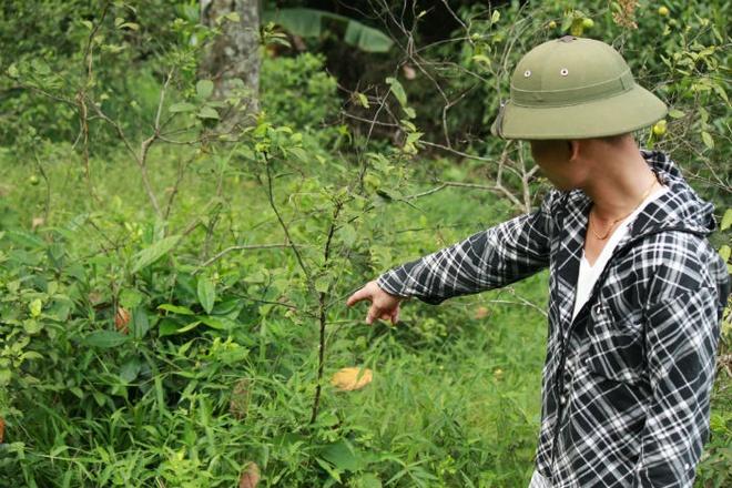 Người dân địa phương hoang mang trước tình trạng rắn lục đuôi đỏ cực độc xuất hiện nhan nhản.