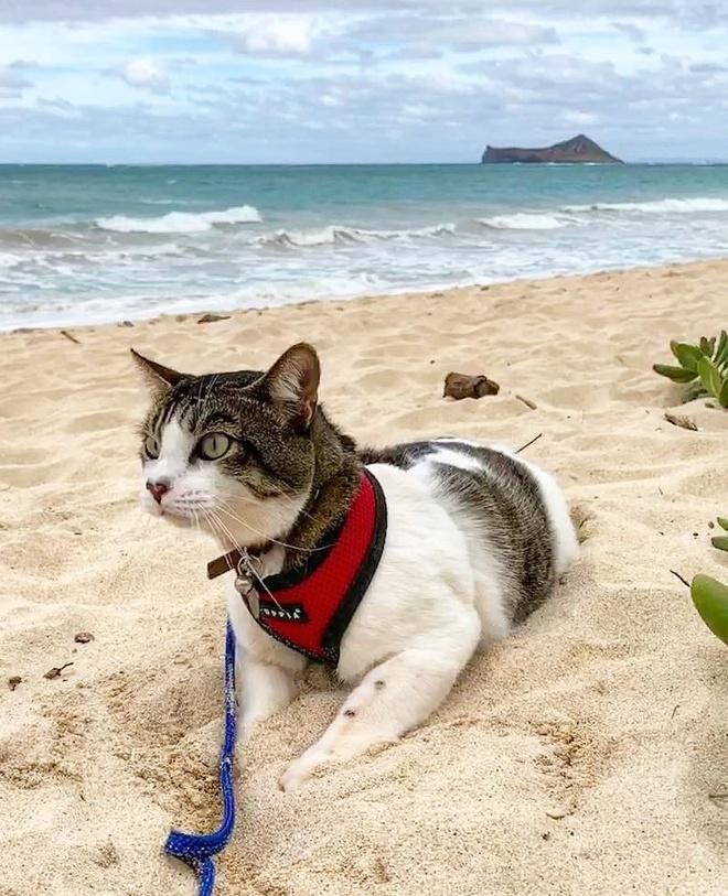 Chu meo Hawaii thanh hien tuong mang nho tai boi va luot song hinh anh 8 h18_1.jpg