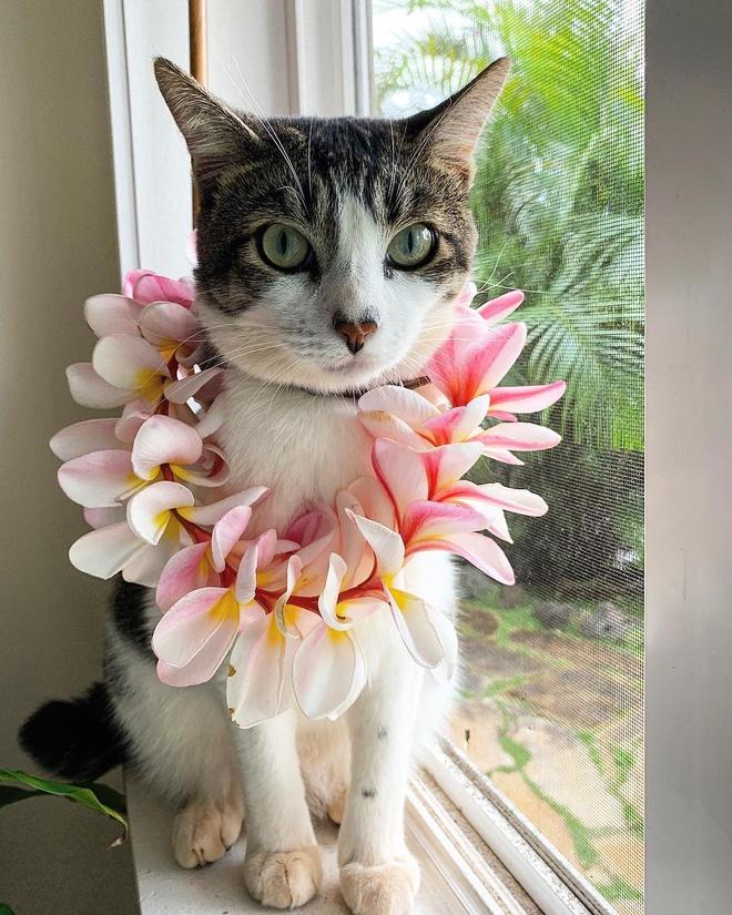 Chu meo Hawaii thanh hien tuong mang nho tai boi va luot song hinh anh 2 h23.jpg