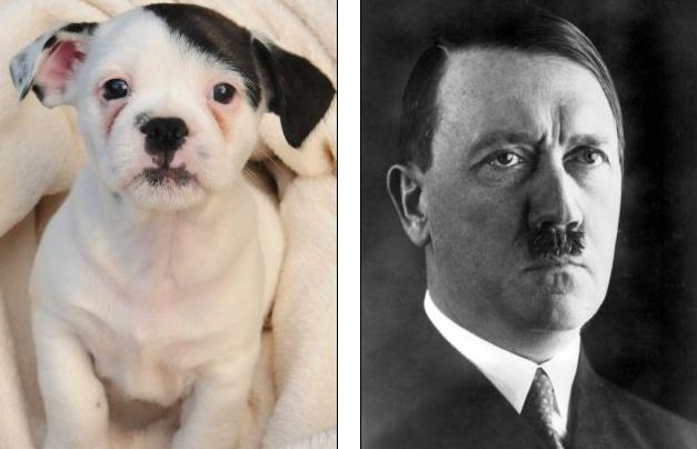 Con cho co khuon mat giong Hitler hinh anh