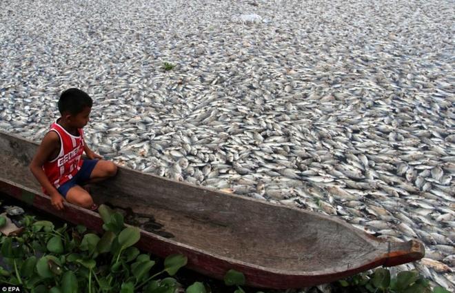 Nhung canh bao dang so ve bien doi khi hau (ky 2) hinh anh 1 Hàng nghìn con cá chết nổi phủ đầy mặt hồ Maninjau ở tỉnh Tây Sumatra của Indonesia.vào tháng 3/20014.