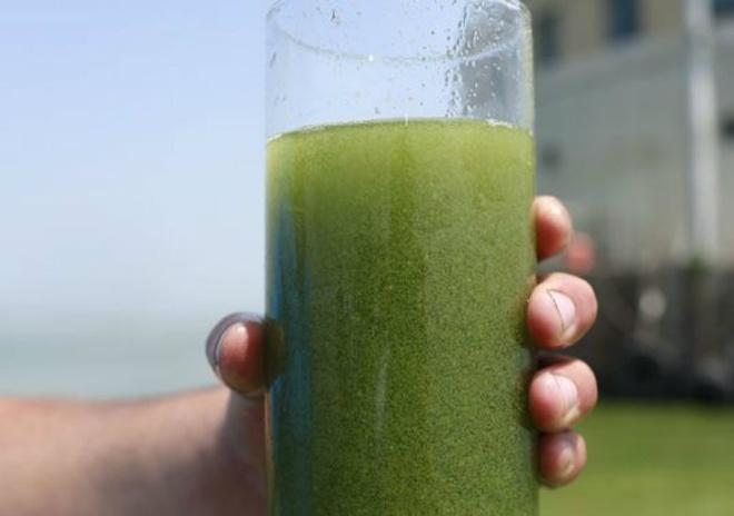 Nhung canh bao dang so ve bien doi khi hau (ky 2) hinh anh 3 Theo các nhà khoa học, phốt pho từ các trang trại, nước thải và ngành công nghiệp phân bón tổng hợp làm nở rộ tảo lục. Cúng phát triển sau 5 năm.