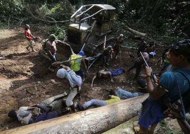 Tho dan rung ram Amazon duoi danh lam tac hinh anh 4 Các chiến binh tấn công những tên lâm tặc.