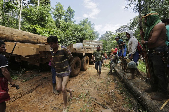 Tho dan rung ram Amazon duoi danh lam tac hinh anh 5 Các chiến binh Ka'apor thả bọn lâm tặc nhưng thu giữ xe tải, gỗ, vũ khí.