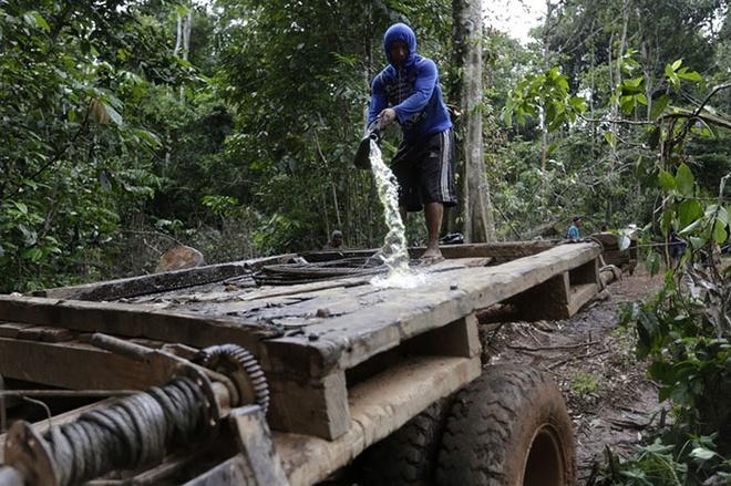 Tho dan rung ram Amazon duoi danh lam tac hinh anh 7 Một chiến binh tẩm xăng lên xe tải của bọn lâm tặc.