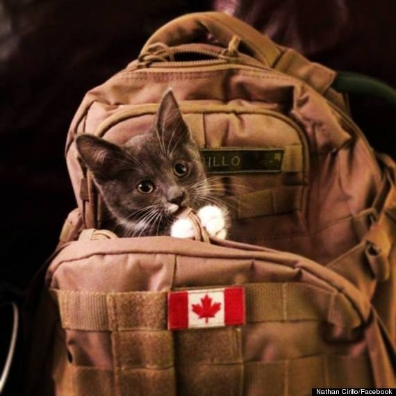 Cho cua binh si Canada thiet mang van ngong chu nhan hinh anh 7 a