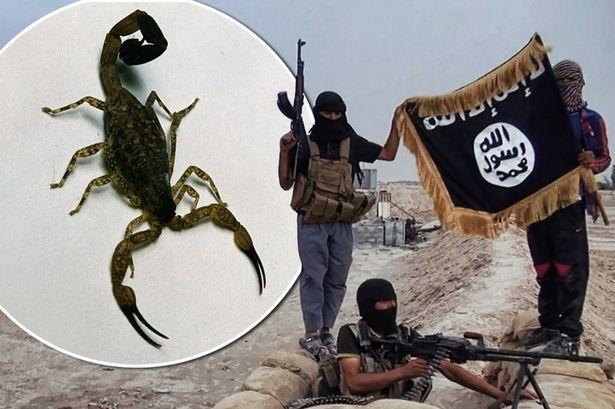 IS tung bom bo cap song gay hoang loan o Iraq hinh anh