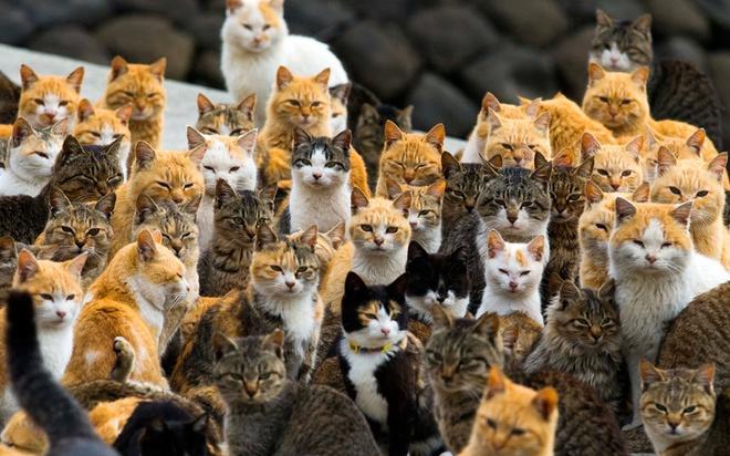 Loat anh an tuong nhat tuan (2 - 7/3) hinh anh 9 Những chú mèo xinh xắn