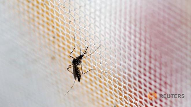 Han Quoc xac nhan ca nhiem virus Zika dau tien hinh anh