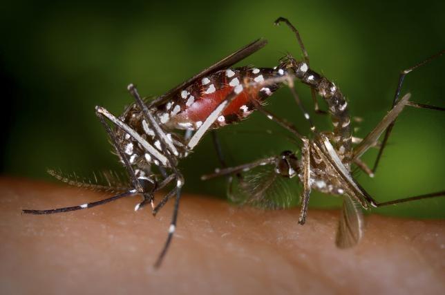 My chi gan 600 trieu USD chong virus Zika hinh anh