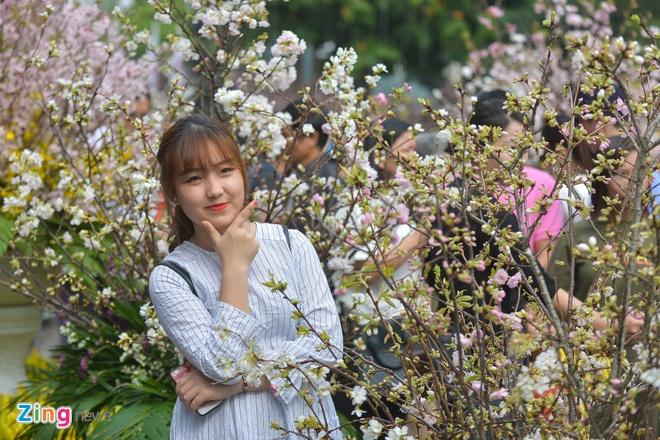 Le hoi hoa anh dao ben ho Guom dong nghet du khach hinh anh