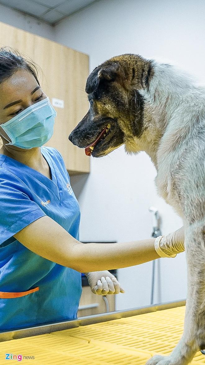 Một ngày của nữ bác sĩ khám chữa, phẫu thuật cho chó, mèo