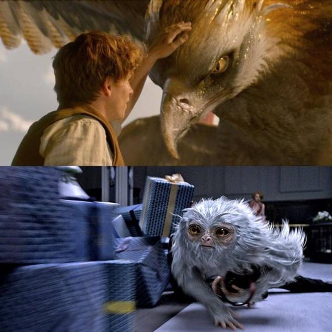 'Fantastic Beast' bi chen ep vi phim cua Pham Bang Bang hinh anh 2