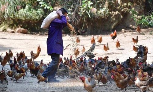 Thieu gia cam vi dich Covid-19, Trung Quoc nhap khau ga tu My hinh anh 1 chicken1.jpeg