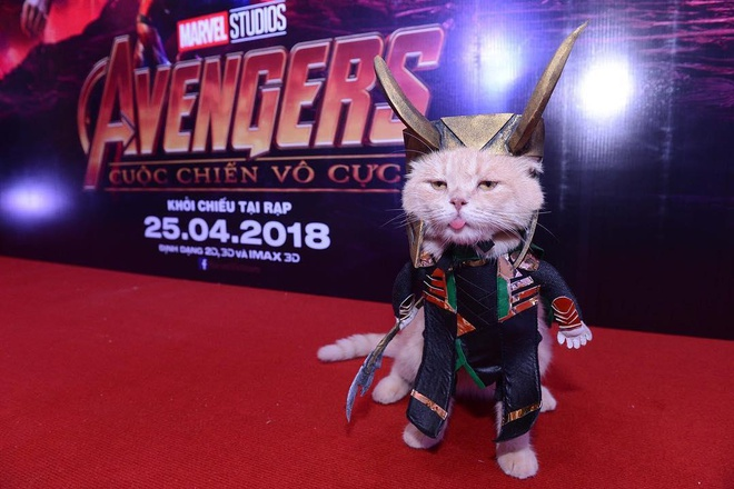 Chu meo ten Cho lai gay cuoi khi 'hoa than' thanh anh hung Avengers hinh anh 10