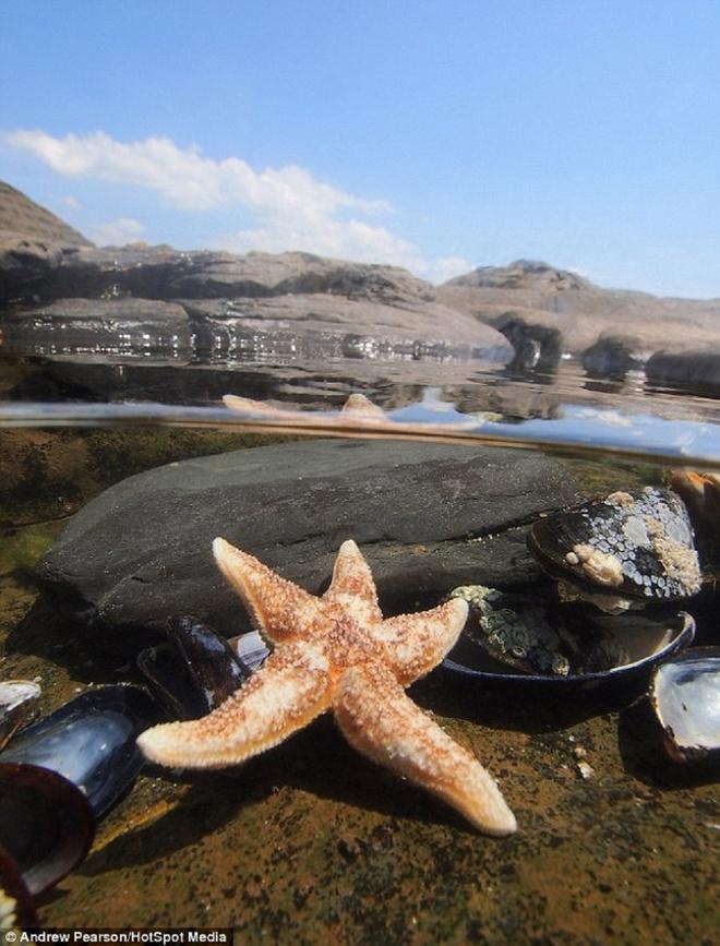 Hinh anh phan tach tren va duoi mat nuoc hinh anh 3 Bức ảnh chụp một con sao biển gần đảo Purbeck, hạt Dorset. Pearson cho biết anh muốn ghi lại những hình ảnh độc đáo về cuộc sống trên và dưới mặt nước.