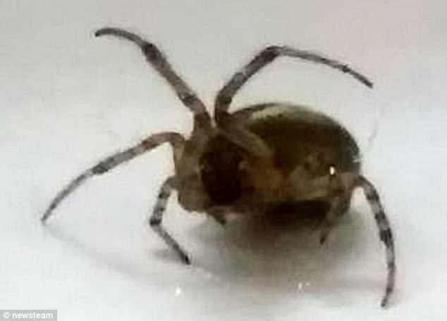 Chan sung to nhu chan voi vi nhen can hinh anh 2 Con nhện đã cắn cô Lisa Taylor vào tối 11/10. Ảnh: Daily Mail