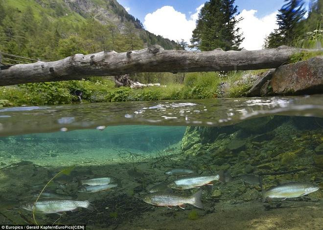 Ngam cong vien bien thanh ho nuoc khi tuyet tan hinh anh 4 Chúng nằm trong dự án đầu tư của Áo nhằm bảo vệ các sông, suối, hồ.