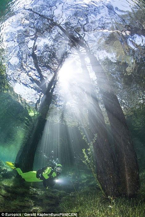 Ngam cong vien bien thanh ho nuoc khi tuyet tan hinh anh 7 Cả rừng cây ngập hoàn toàn dưới nước với độ sâu hơn 12 mét.