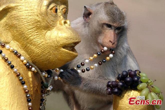 Dai tiec buffet cua khi o Thai Lan hinh anh 3 Nhà tổ chức chuẩn bị khoảng hai tấn trái cây, rau quả, đường và nước ngọt cho bữa đại tiệc của khỉ ở tỉnh Lopburi.