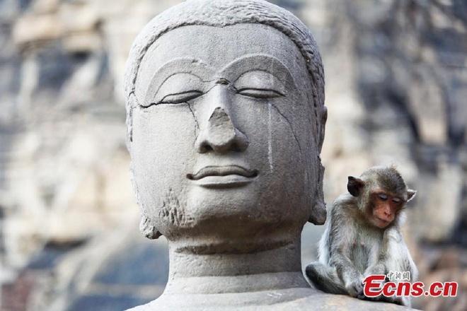 Dai tiec buffet cua khi o Thai Lan hinh anh 8 Người dân Thái Lan, đặc biệt là người dân tỉnh Lopburi, rất yêu quý khỉ, chúng là yếu tổ quan trọng góp phần thúc đẩy ngành du lịch.