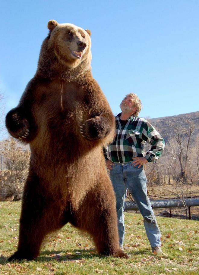 Loat anh ngoan muc nhat trong nam 2014 (ky 4) hinh anh 1 Nhà huấn luyện gấu Doug Seus chụp hình cạnh thú cưng khổng lồ. Ảnh: Scott Smtih/ Barcroft